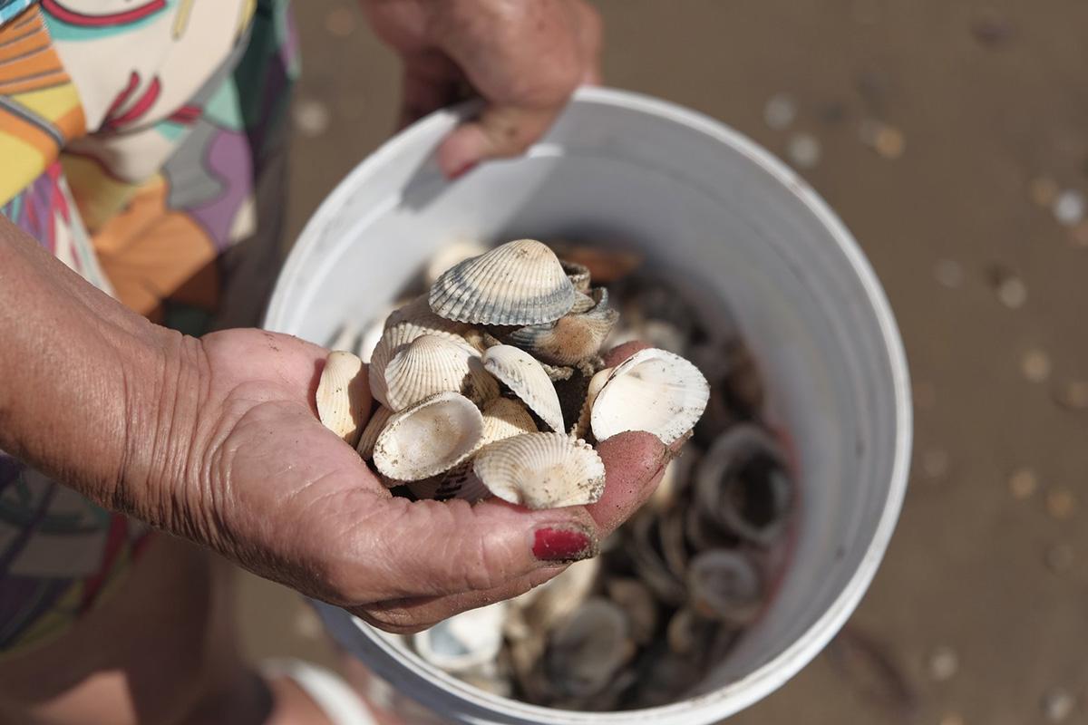 Conchas na mão e outra mão segura um balde